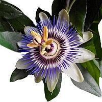 Декоративноцветущая экзотика
