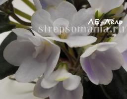Узамбарская фиалка ЛЕ-Лель