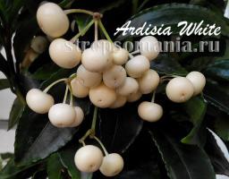 Ардизия White